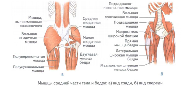 Какие мыщцы средней части тела влияют на бег?