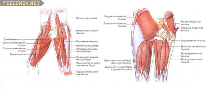 Мышцы верхней части ног при беге