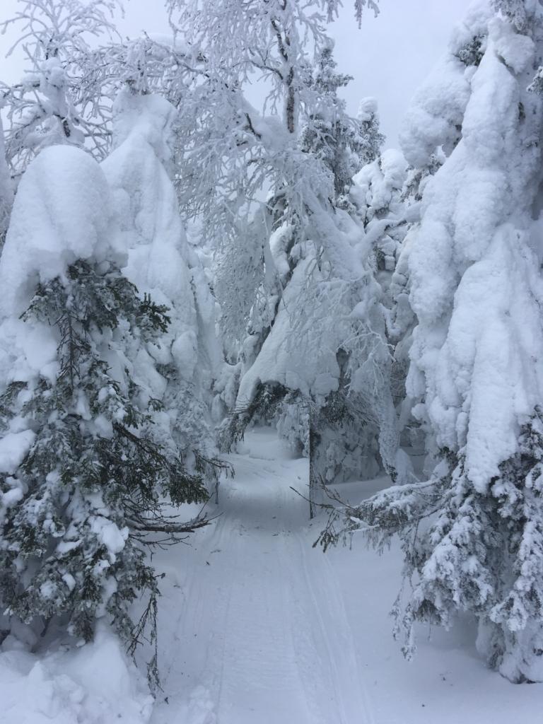 снежные деревья на вершине Качканар